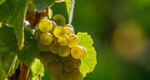 vino bianco altoatesino